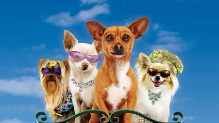 000_beverly_hills_chihuahua_000_-_254